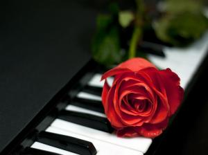 piano-and-rose