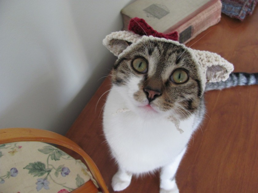 Cat with a bunny hat