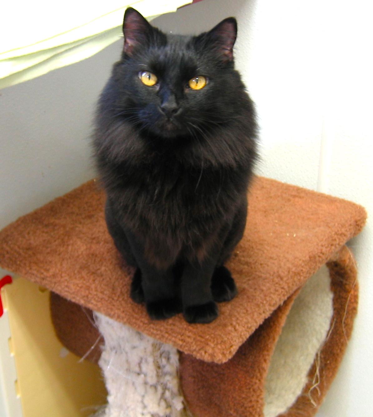 A Cat Named MotorCourt