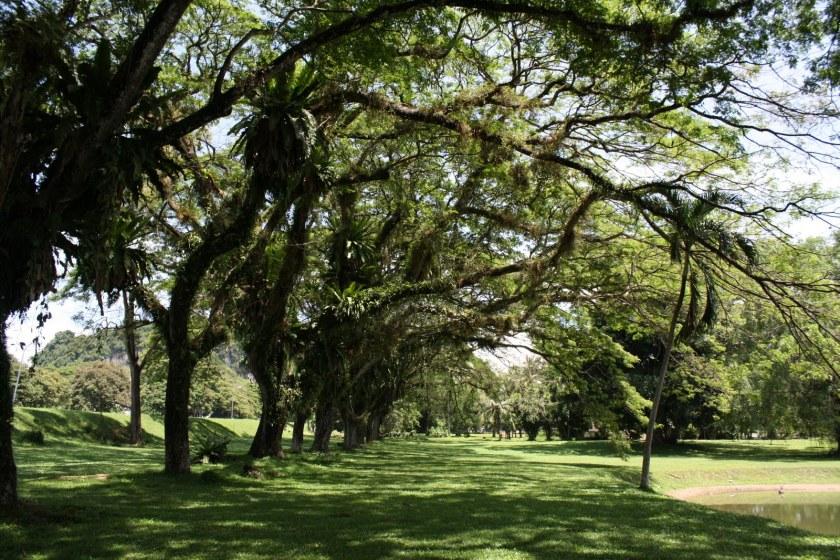 Shelter Trees