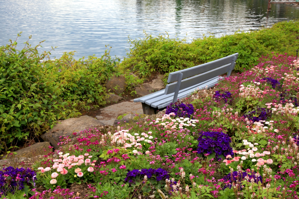 flowers by the lake