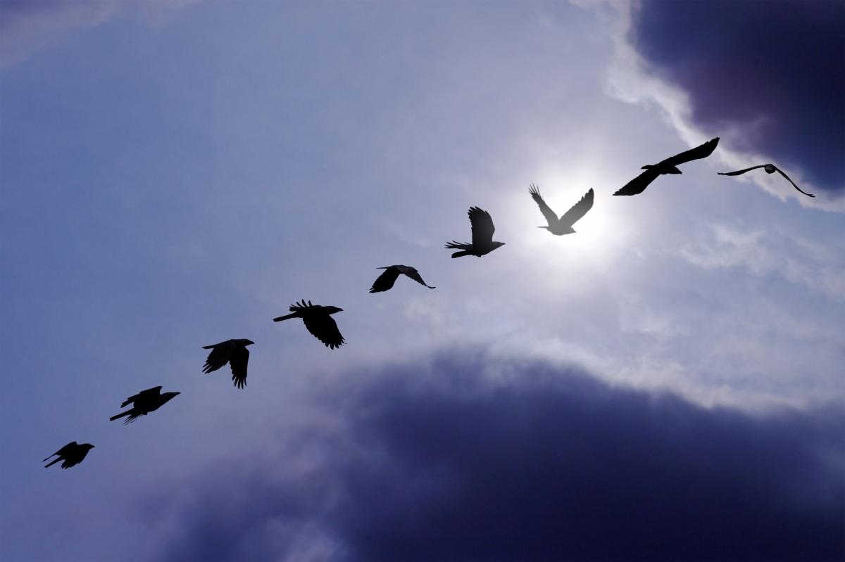 Midnight Migration