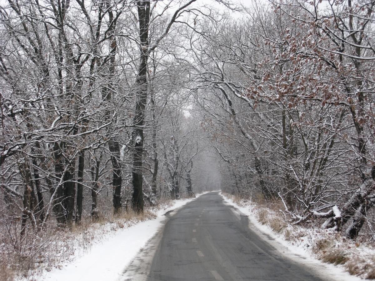 The Cheerless Road of Winter