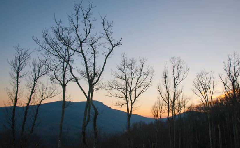 South Carolina Winter