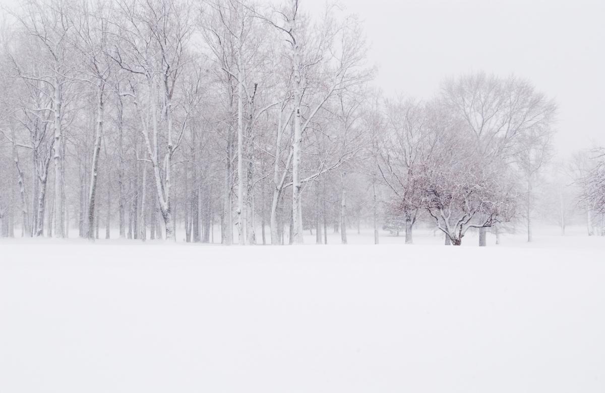 snow silent fell