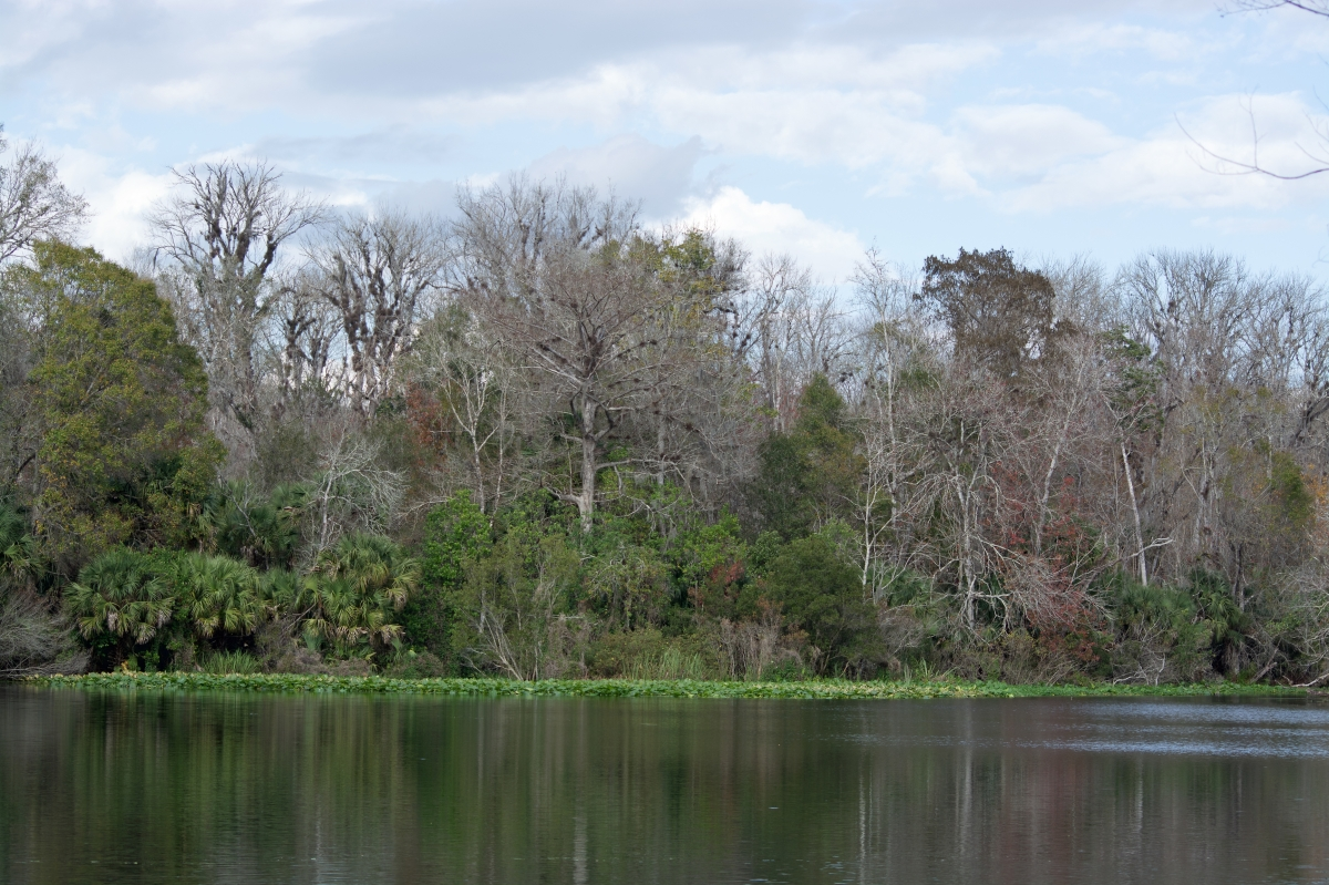 Seminole heart
