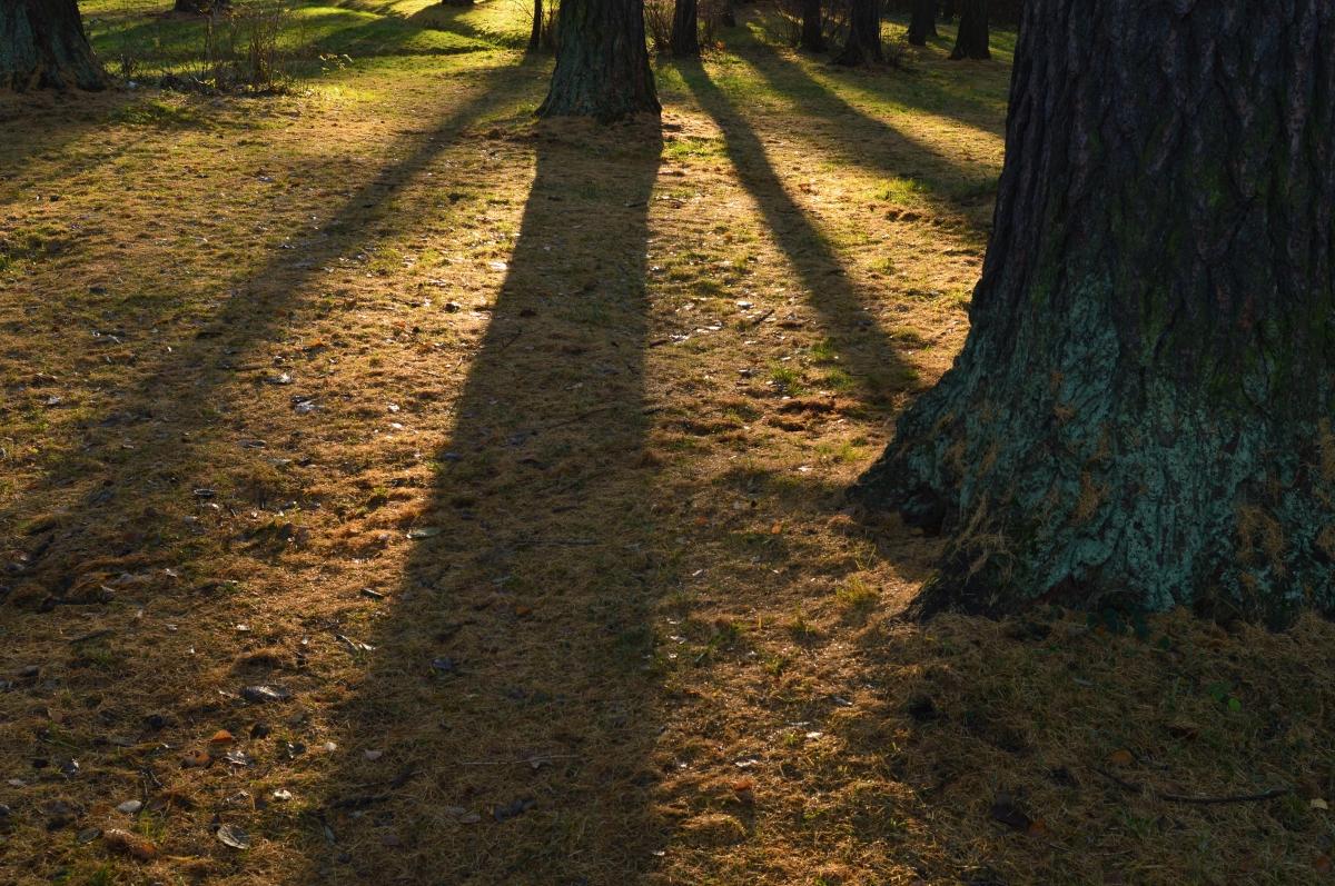 across the shadows