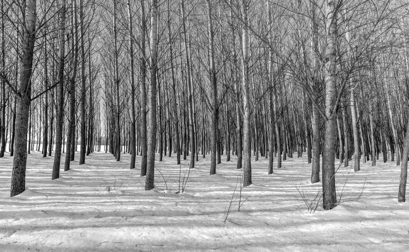 Frozen Rows