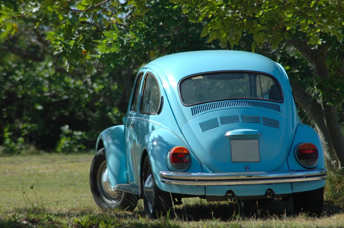 A Blue Beetle