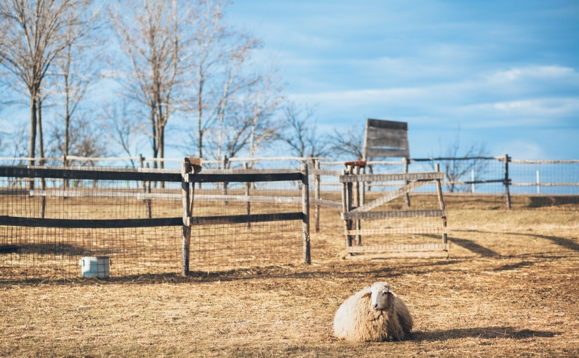 Counting Sheep?
