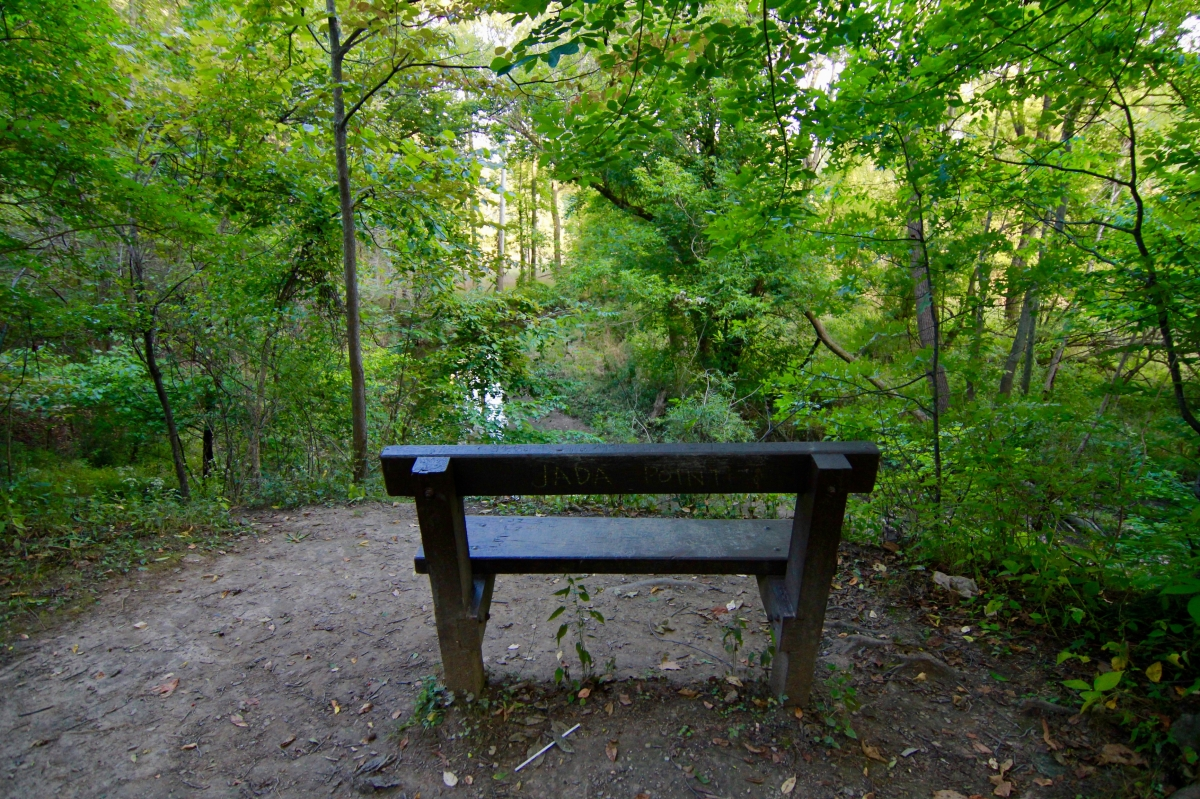 thoughts from a forestpath