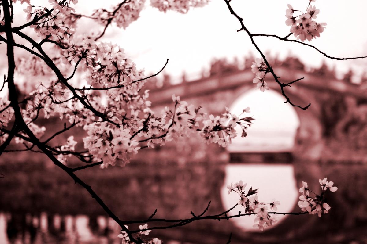 spring stirred