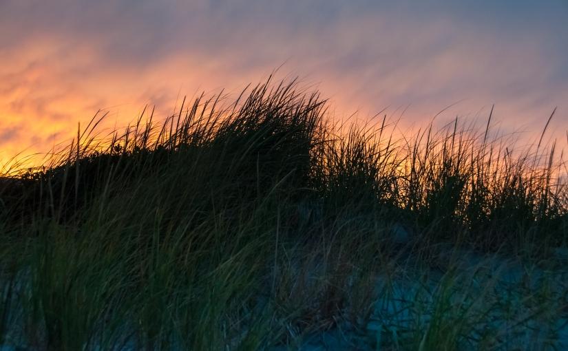 A Sea-Grass Elegy