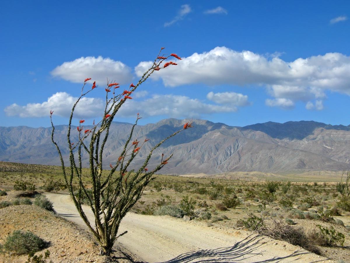 desert ways