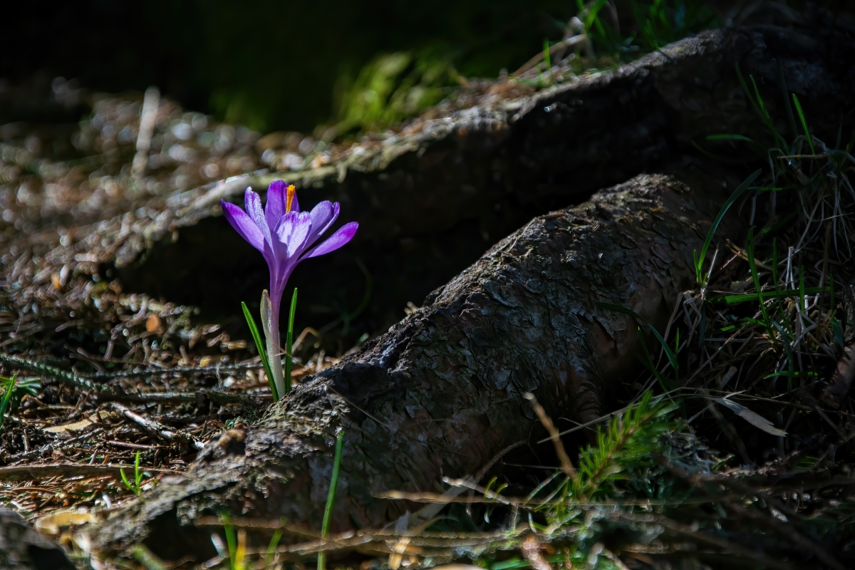 Lonely Flowers –2
